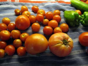 End of Summer tomatoes 2012