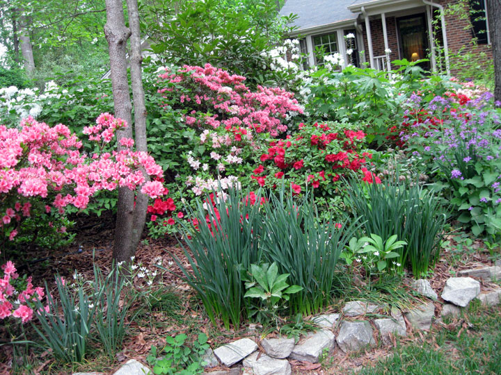 Like A Lot Of People Who Started Gardening In The Early 1980s, I Was In  Love With Azaleas.
