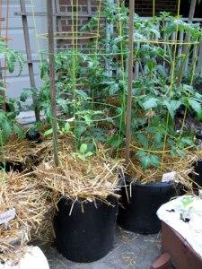 may_gardenpot