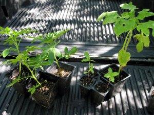 flowergarden_newplants