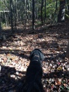 Jasper hiking in the woods. Blog posts are always better with dogs in them ;)