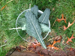 Picking Kale from my garden