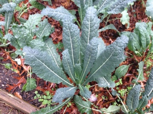 Kale - Super Food, super easy to grow. You should grow that