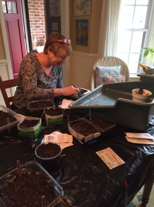 Intense tomato seed sowing, this was before we broke out that wine ;)